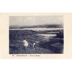 MADAGASCAR - Dans la rizière